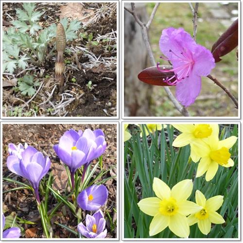 春の花2015年5月2