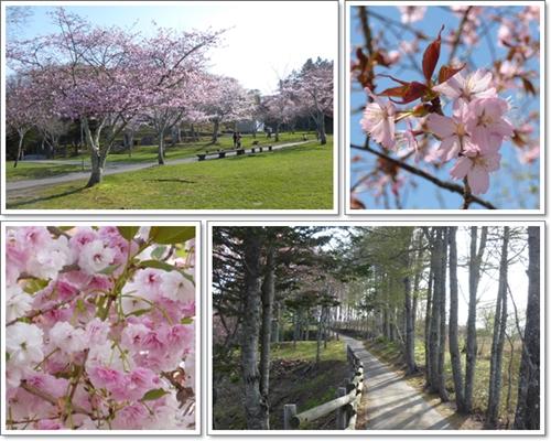 子野日公園2015年5月