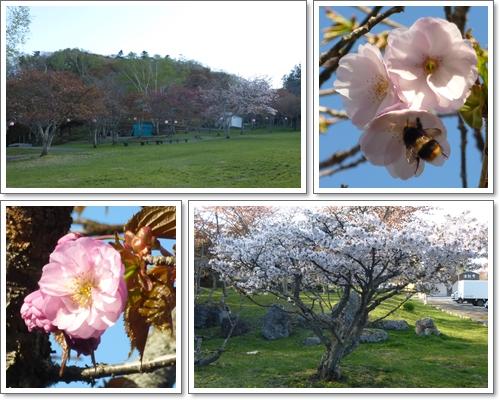 子野日公園2015年5月13日