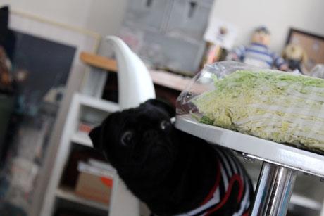 白菜みっけ~!