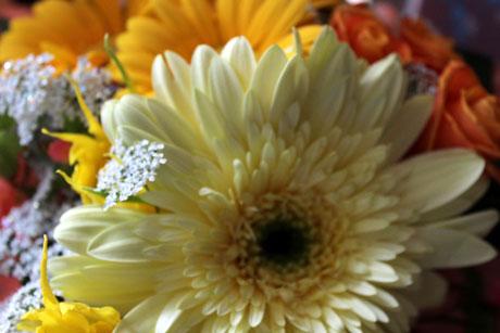 団吉の月命日のお花