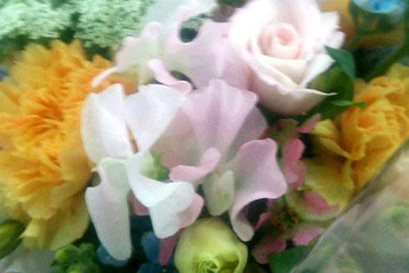 ふぁ実のお花