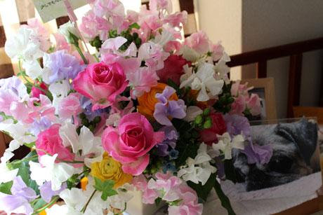 思いがけないお花のプレゼント