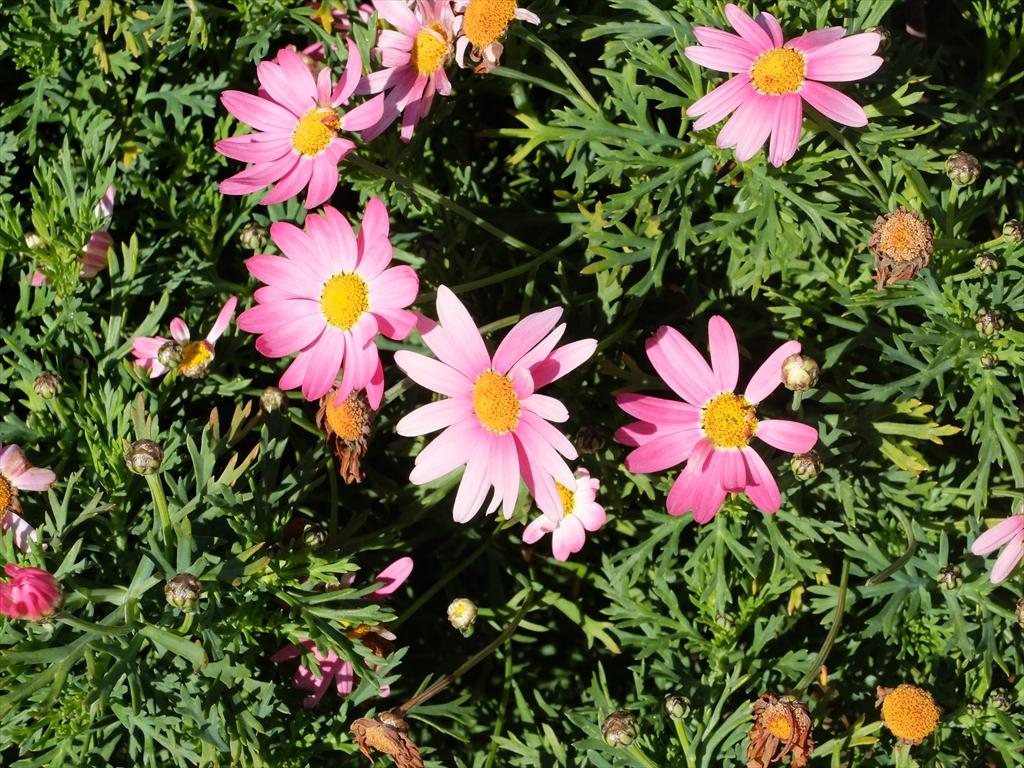 美しい花が出迎えてくれている_3