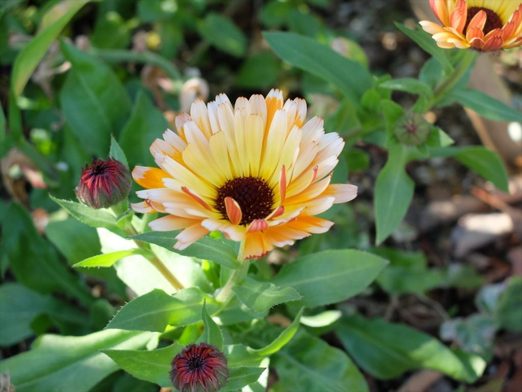 美しい花が出迎えてくれている_4