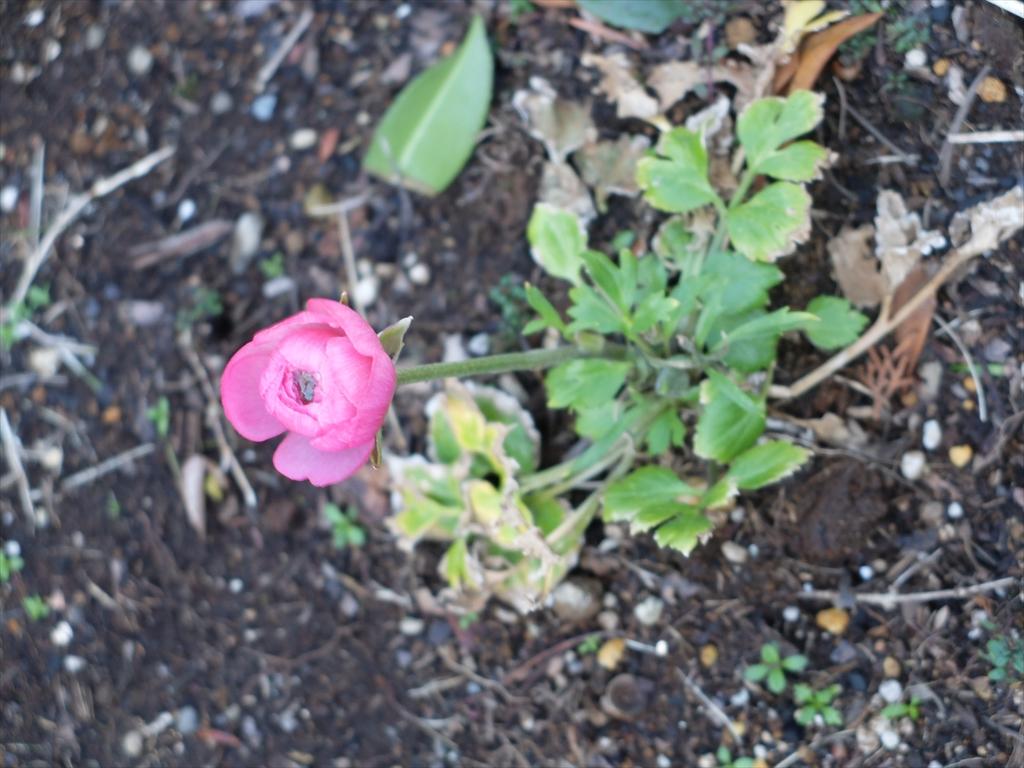 花の様子_1