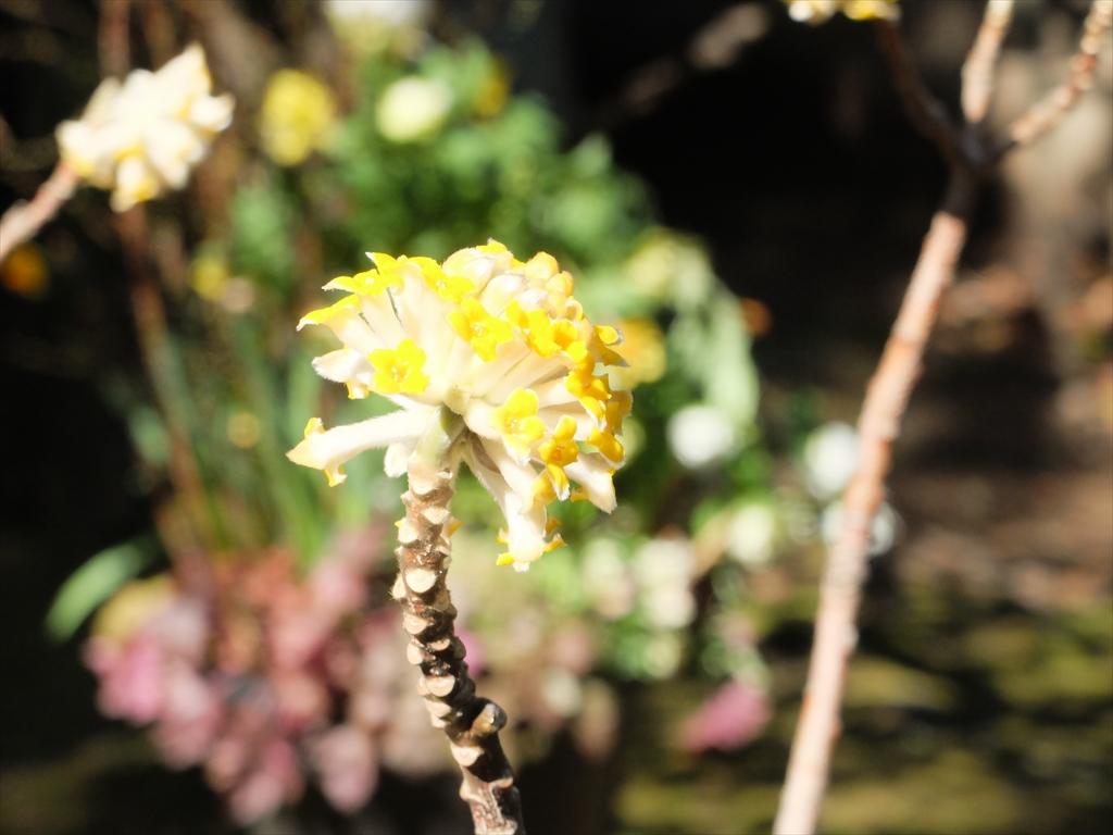 花の様子_3