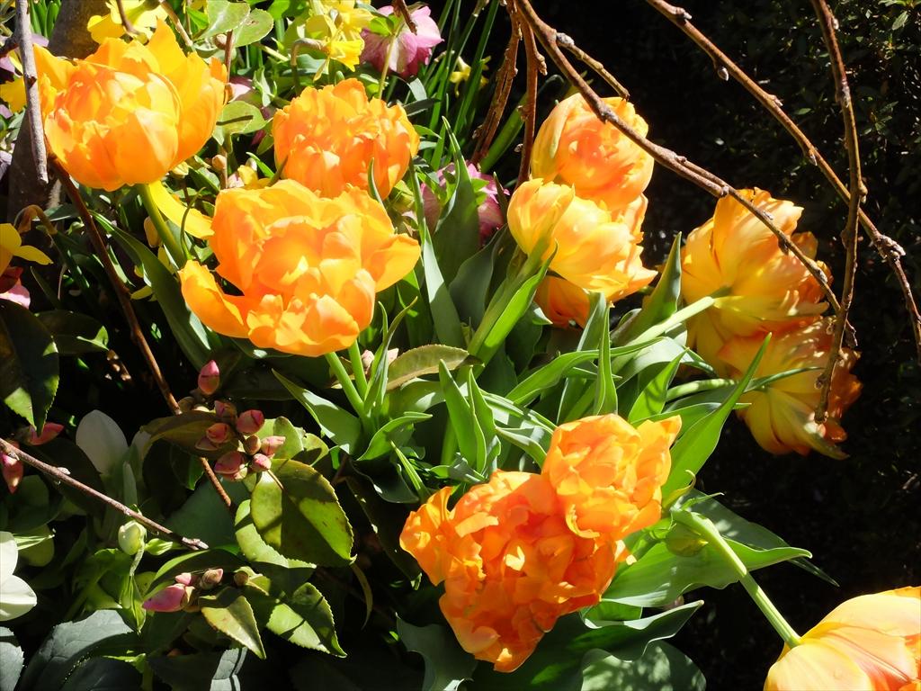 花の様子_5