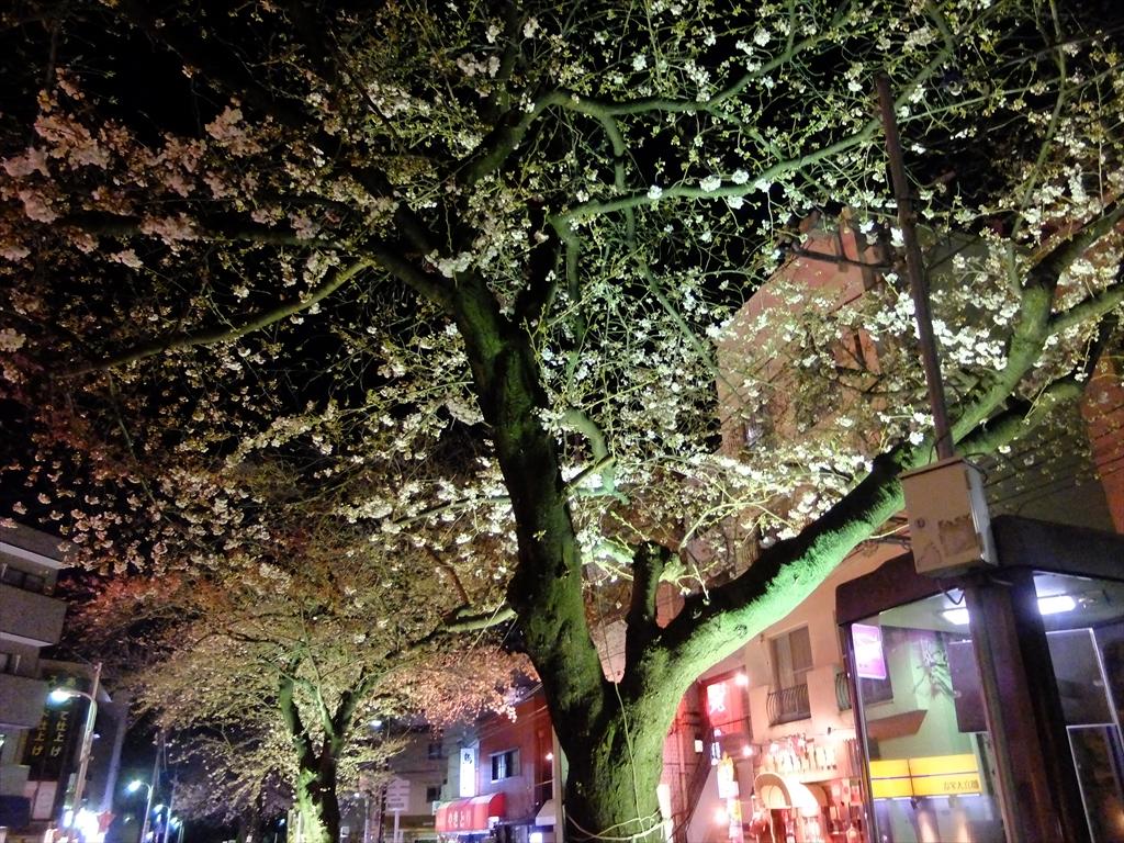 昨25日の桜_3