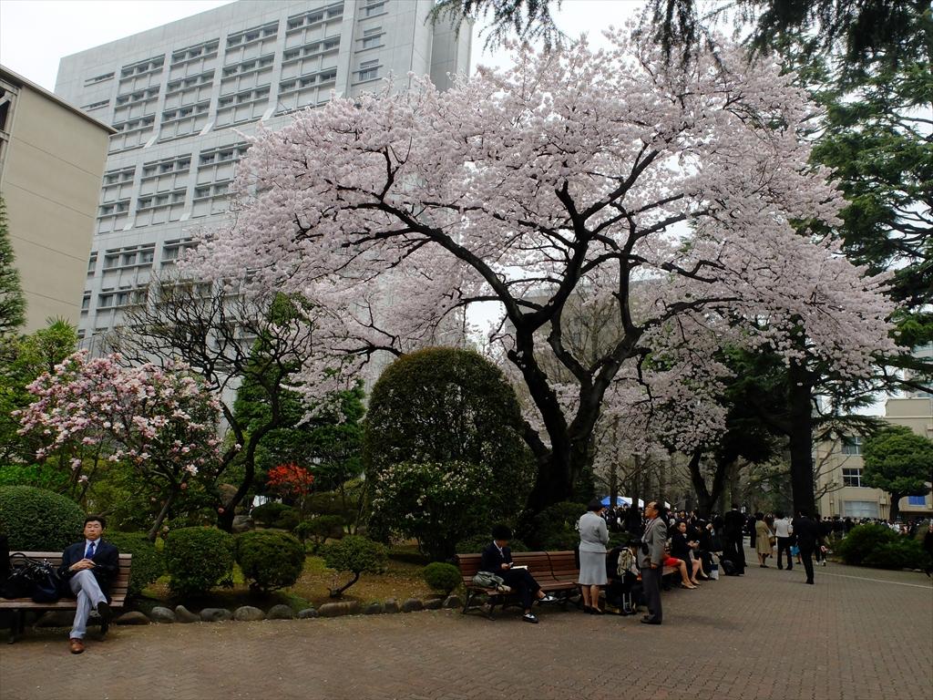 青山学院大学キャンパスの様子_21