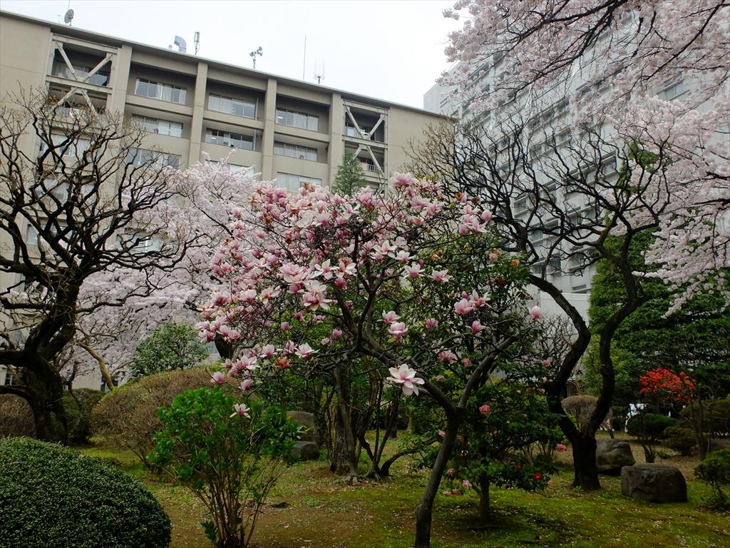 青山学院大学キャンパスの様子_22