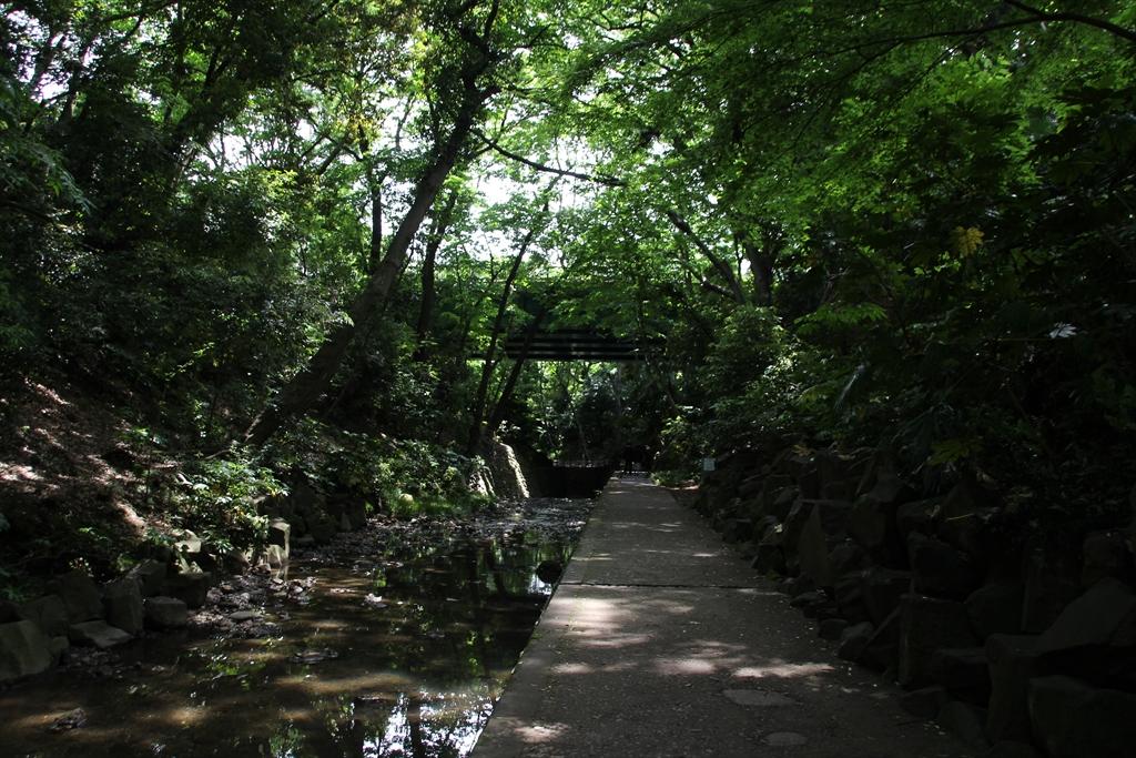 渓谷を更に歩く_5