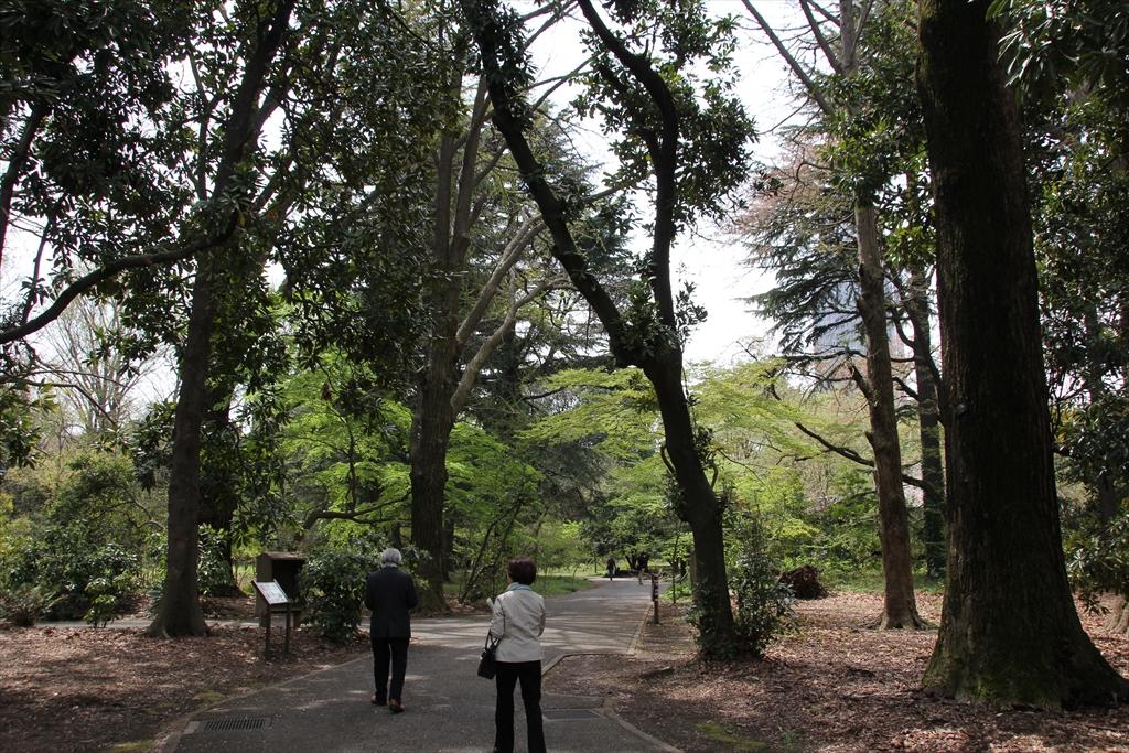 日本庭園に向かう_1