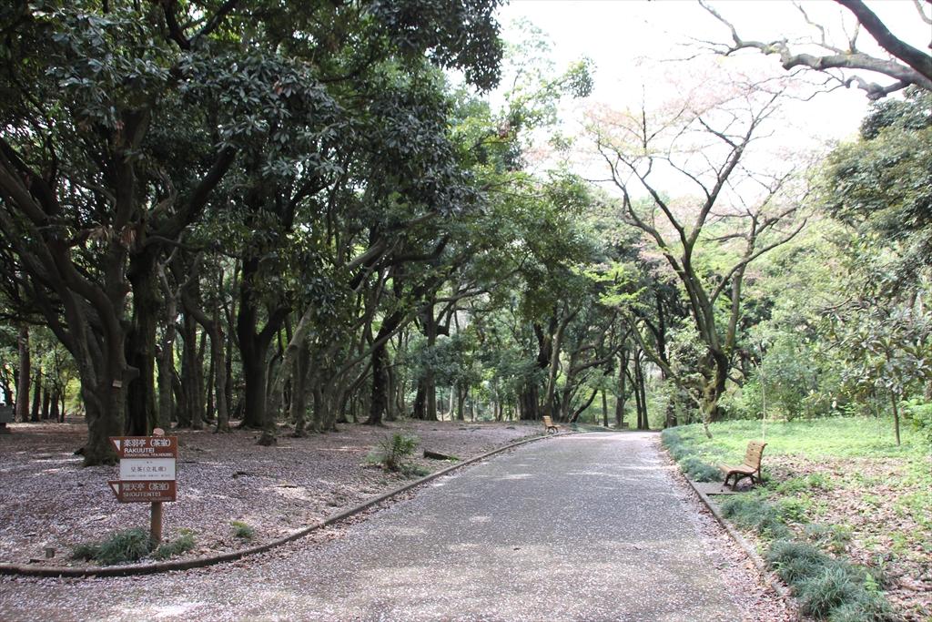 日本庭園に向かう_4