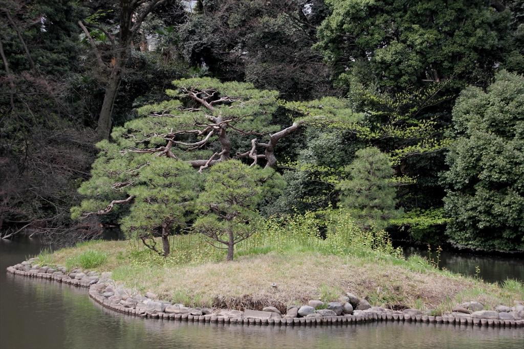 上の池_15