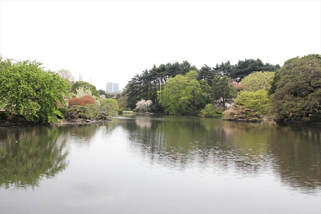 中の池_3