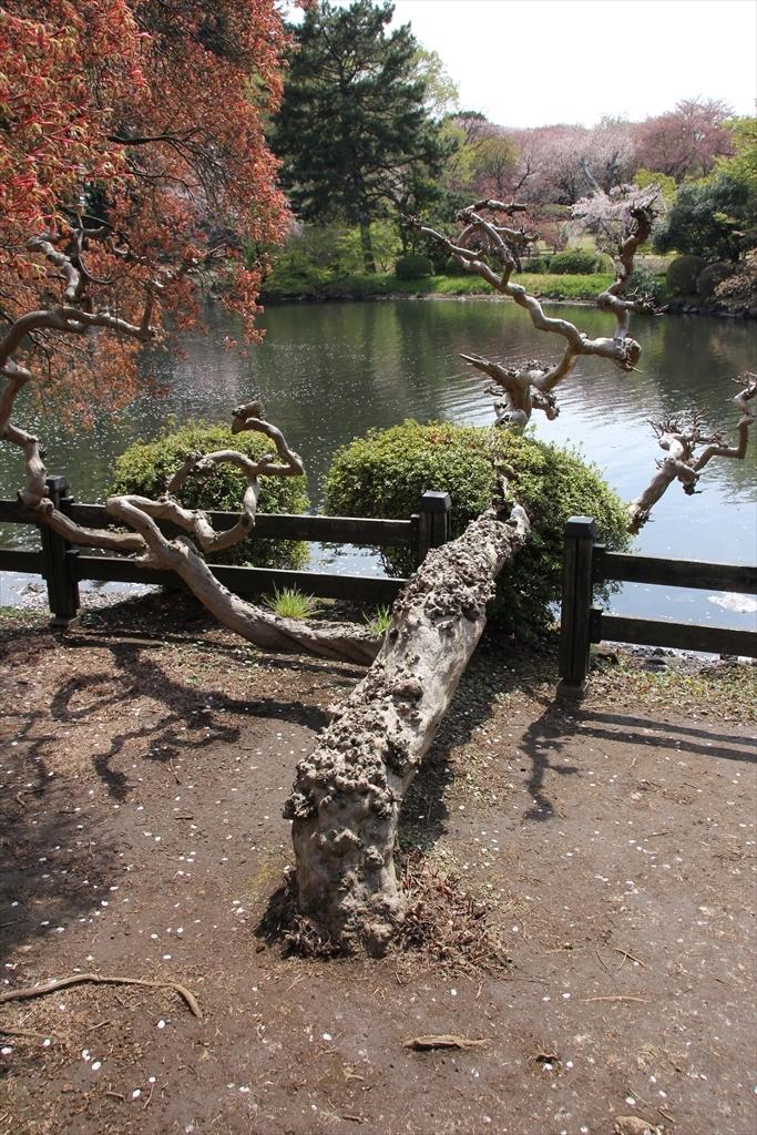 中の池_8