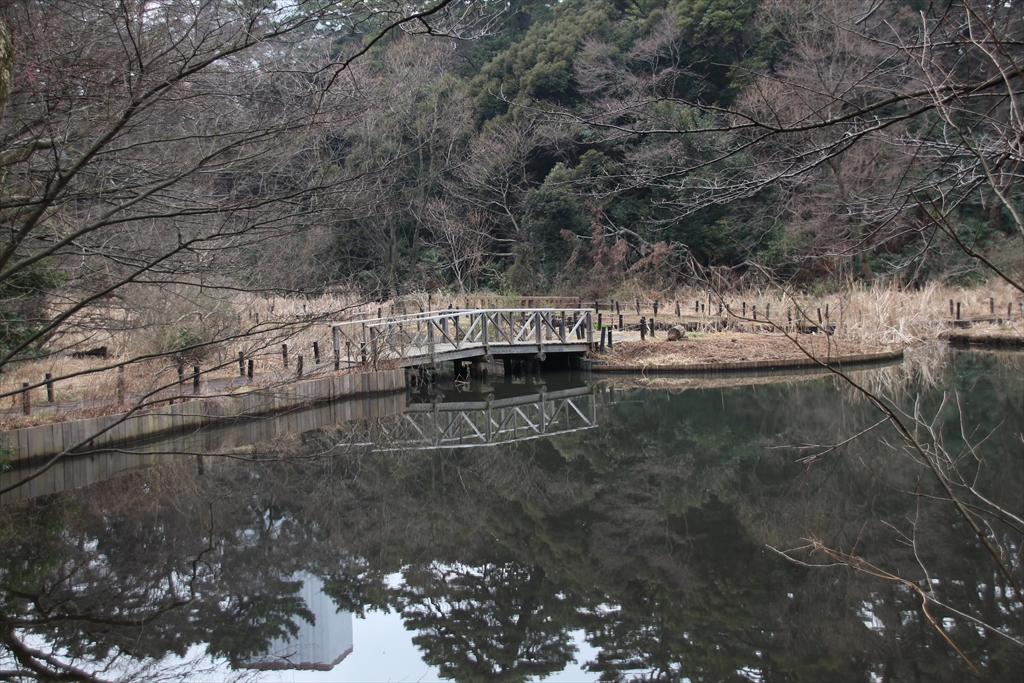 水生植物園_1