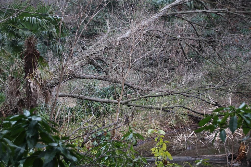 森の小径_1