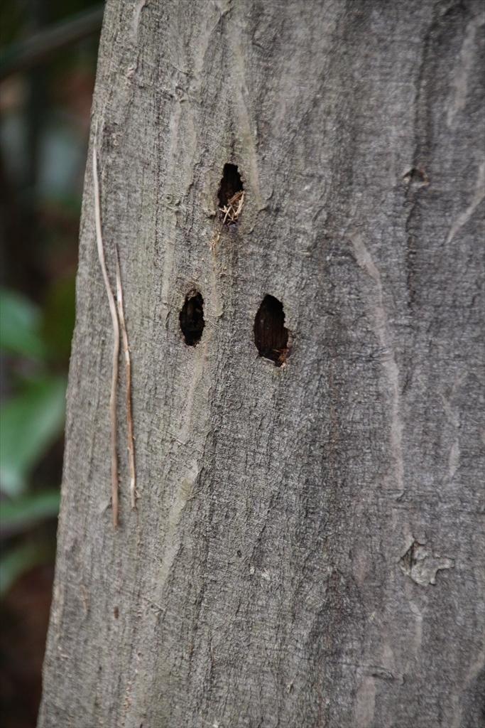 森の小径_2