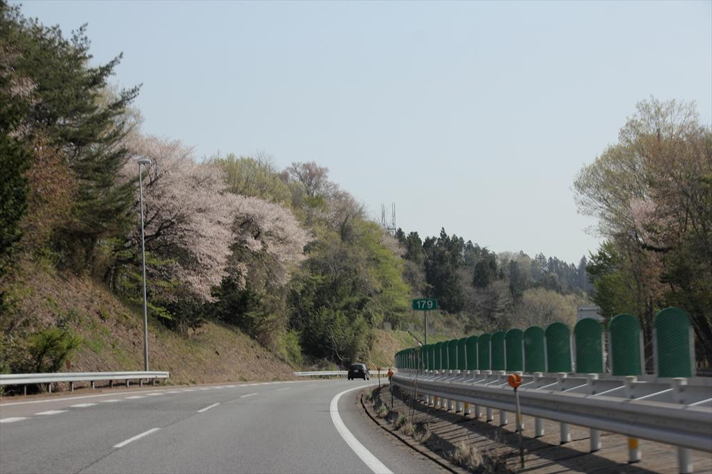 山桜かなあ_1