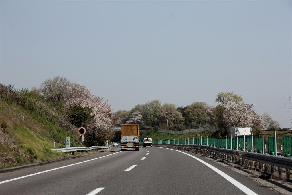 山桜かなあ_2