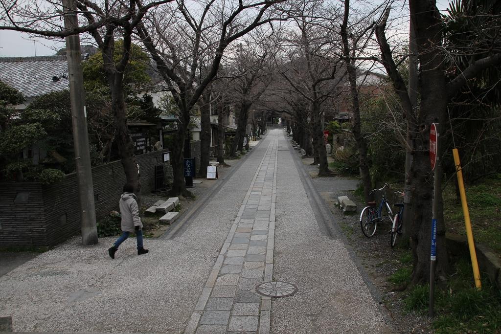 桜並木の参道