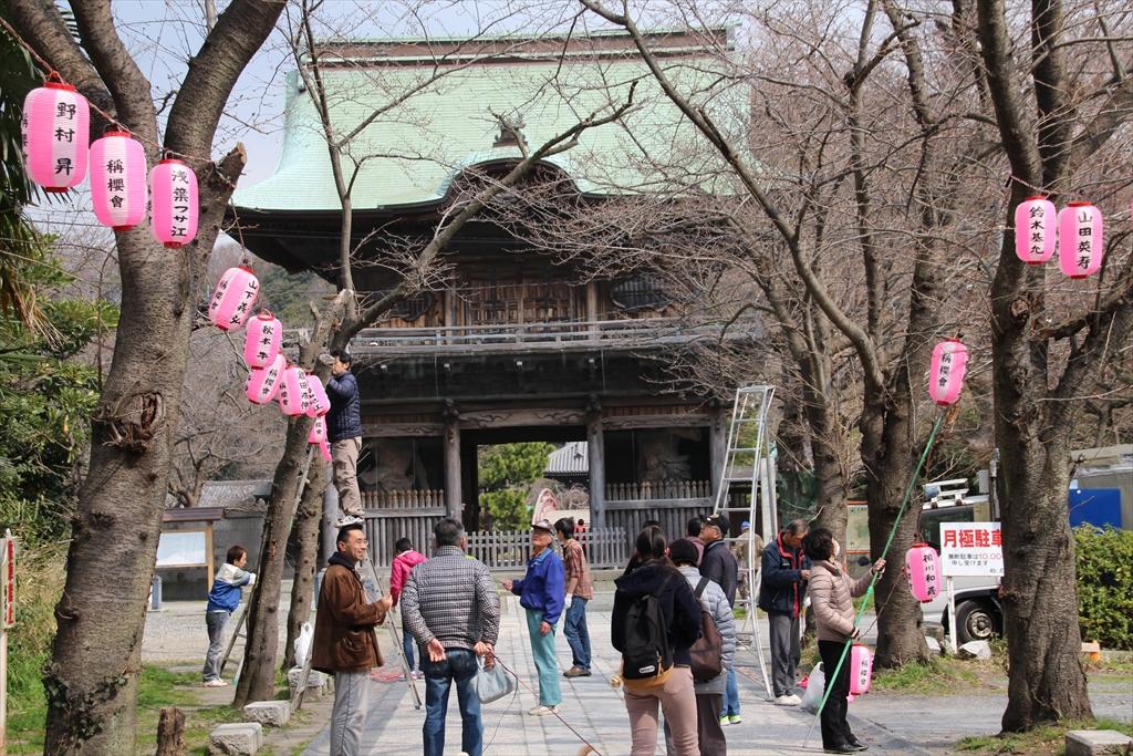 参道では桜まつりの飾り付けが始まっていた_1