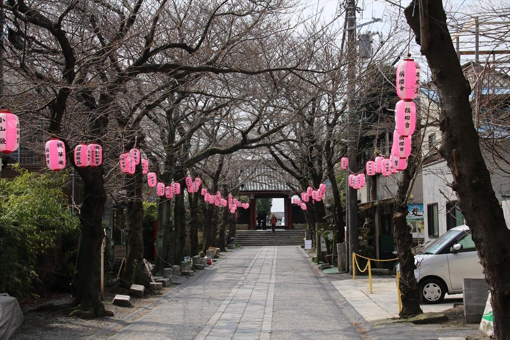 参道では桜まつりの飾り付けが始まっていた_2
