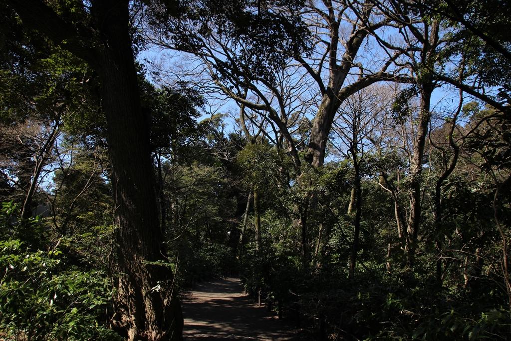 歩いていると森林浴ができる_2