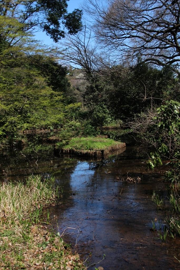 歩いていると森林浴ができる_3