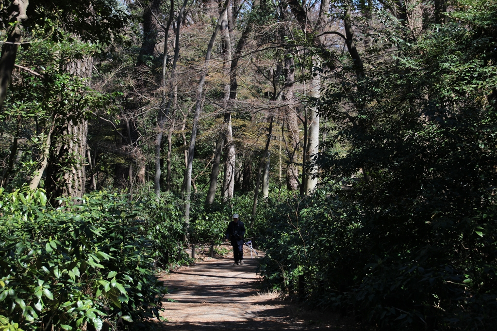 歩いていると森林浴ができる_1