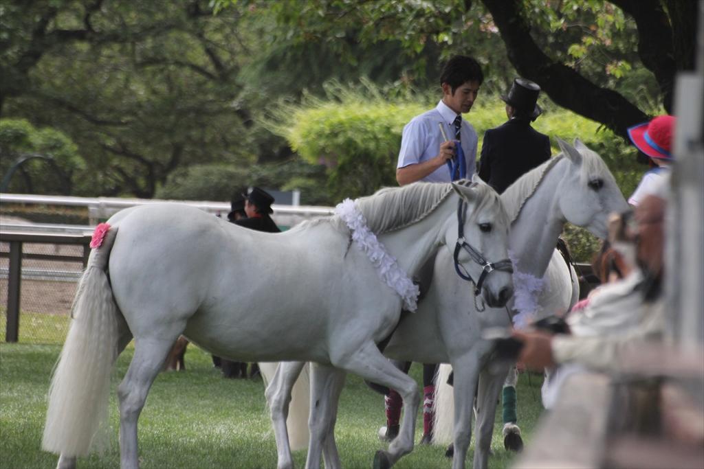 『裸馬』への騎乗_1