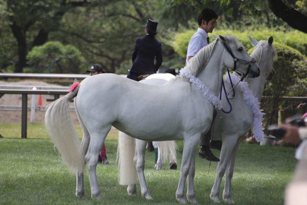 『裸馬』への騎乗_2