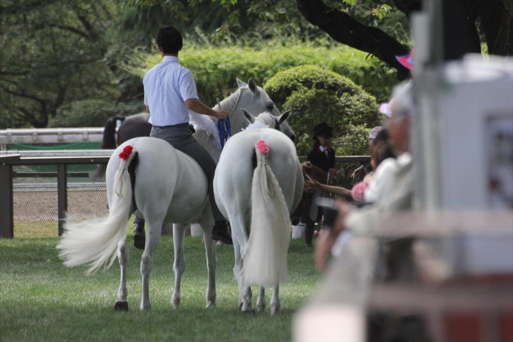 『裸馬』への騎乗_3
