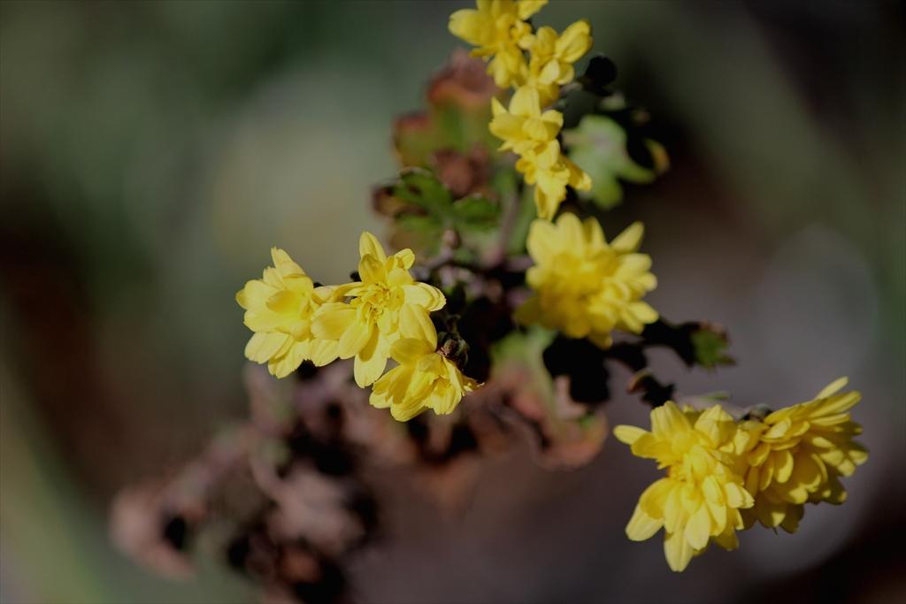 前庭の花はごくわずか_1