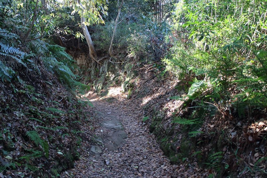 少し岩盤が露出したような道を通る_1