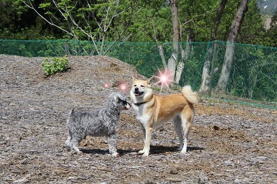 s-dogrun150720-IMG_7420