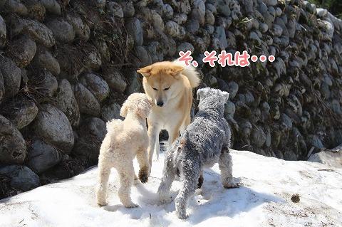 s-dogrun150720-IMG_7454