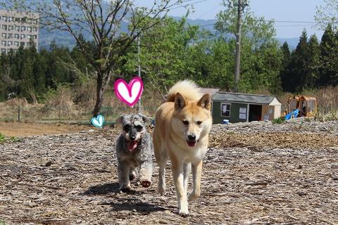 s-dogrun150720-IMG_7513