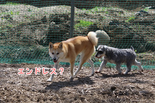 s-dogrun150720-IMG_7515