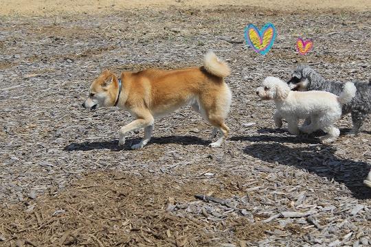 s-dogrun150720-IMG_7409