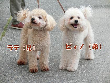 s-dogrun150720-CIMG9402
