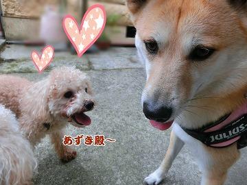 s-dogrun150720-CIMG9434