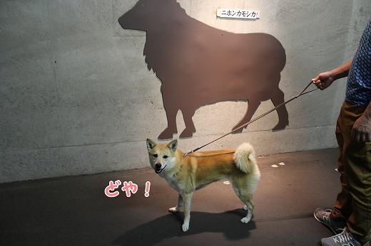 s-kiyosu150725-IMG_7644