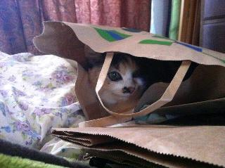 袋の中でうふふふ♪