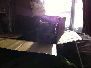 朝陽を浴びる猫