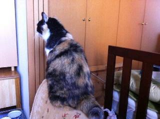 ソファに上る猫
