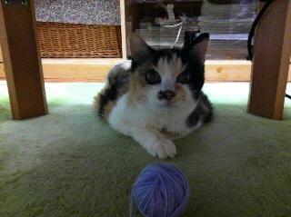 にゃんこが大好きな毛糸