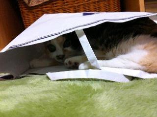 紙袋に入り放題